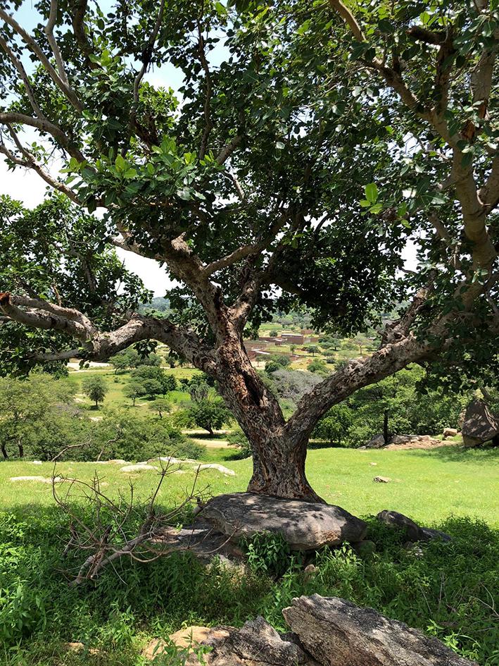 Le Tchad bénéficie d'une végétation très prospère