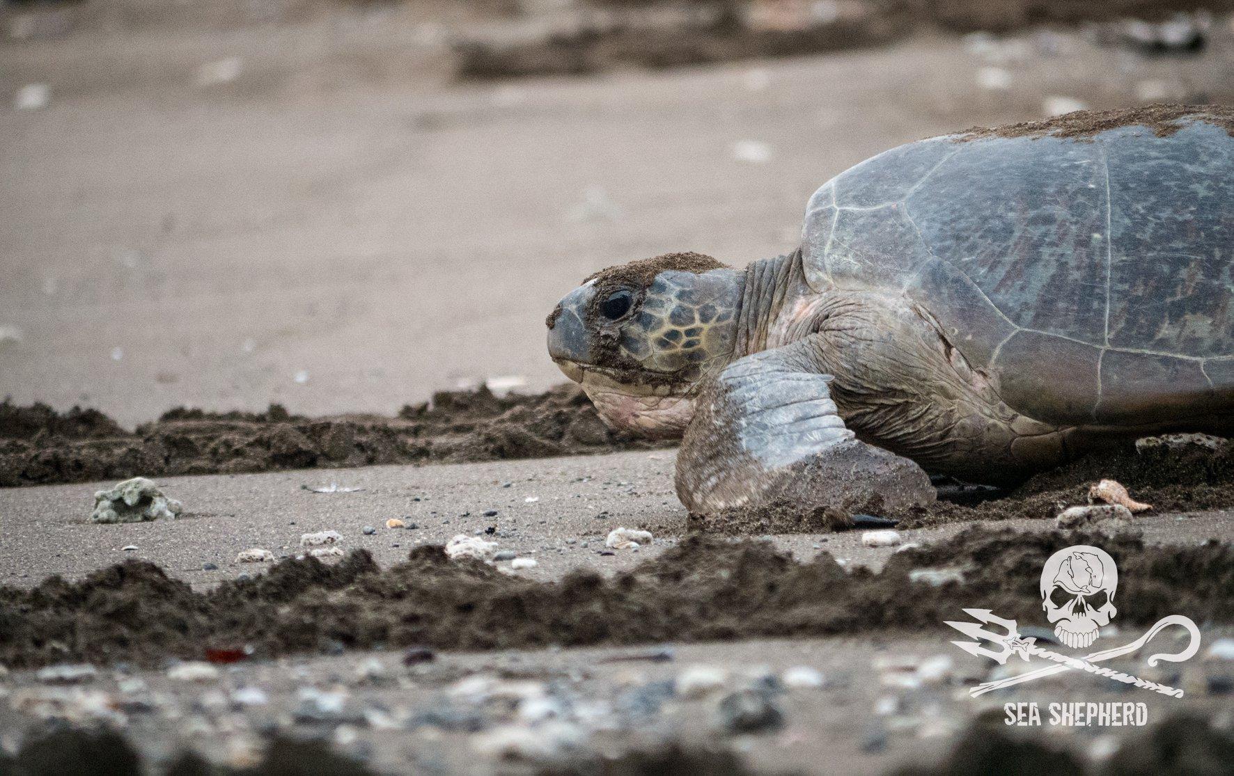 Une tortue vue de profil